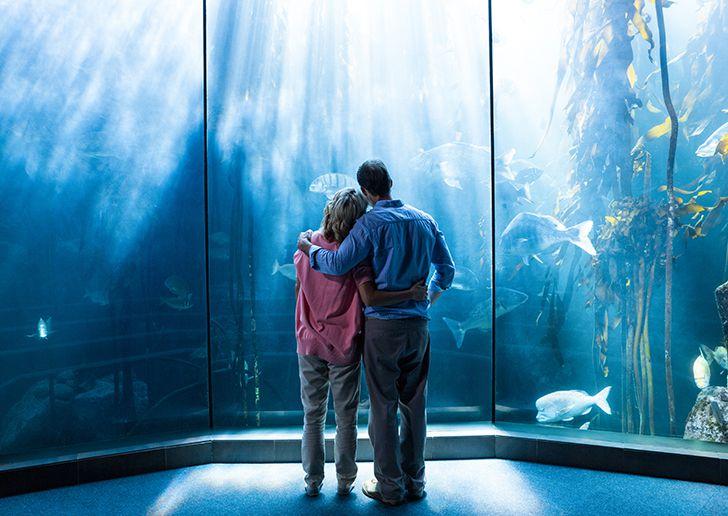 「デート 水族館」の画像検索結果