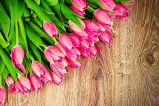 花サプライズ